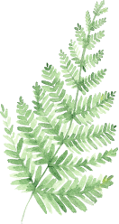 Illustration of Fern